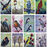 Backyard Birds of the Midwest Greeting Card Pack of 12