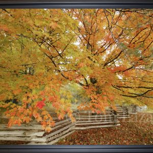 Country Autumn